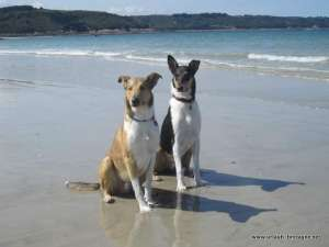 Dogs on Brittany beach